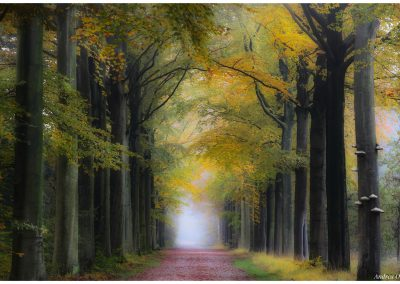Fairytale Lane © Copyright Andrea Otte